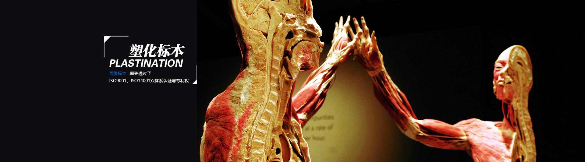医学人体模型