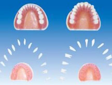 ZM1053标准全口牙模型
