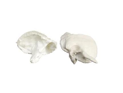 ZM1016 颞骨模型