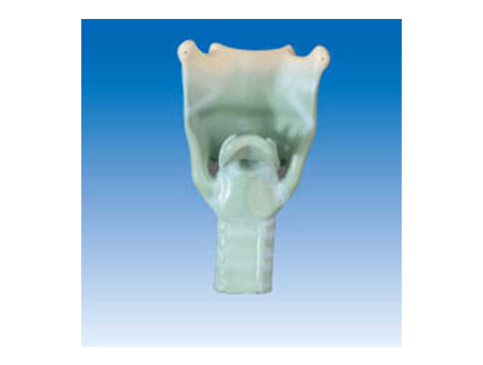 ZM1077 喉软骨
