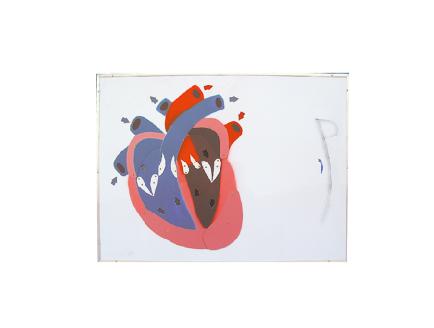 ZM1120 心脏收缩舒张与瓣膜开闭演示模型