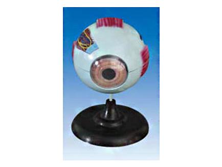 ZM1135 眼球解剖放大