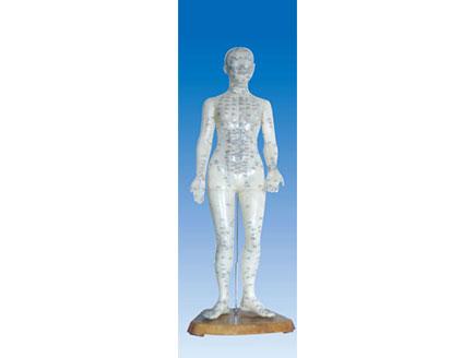 ZM3010 人体针灸模型