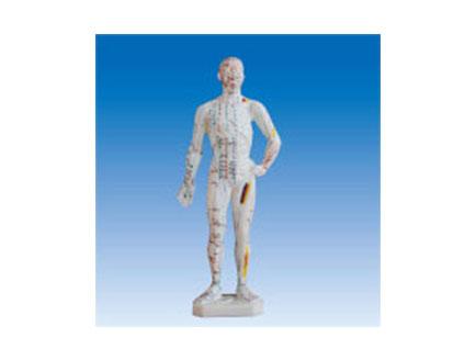 ZM3012 人体针灸模型