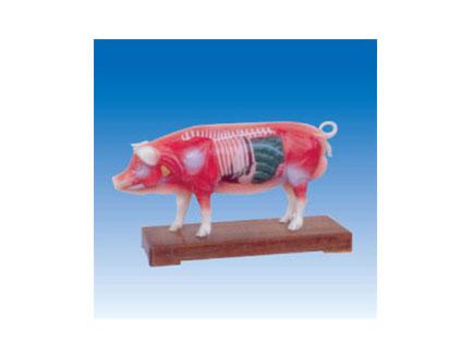 ZM3019 猪体针灸模型