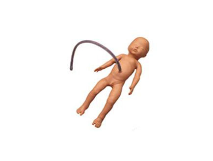 ZMJY/L-4011新生儿脐带插管模型