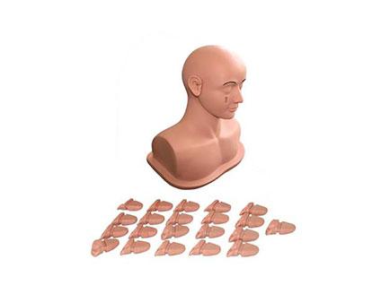 ZMJY/L-W03 耳部检查模型