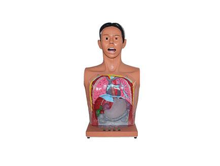 ZMJY/H-0002 透明洗胃模型