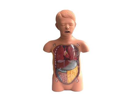 ZMJY/H-2032  儿童透明洗胃训练模型