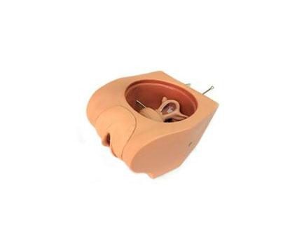 ZMJY/F-0029  女性避孕模拟器