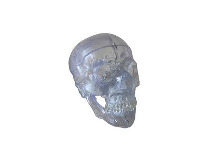 ZMJY/A2006  透明头骨模型