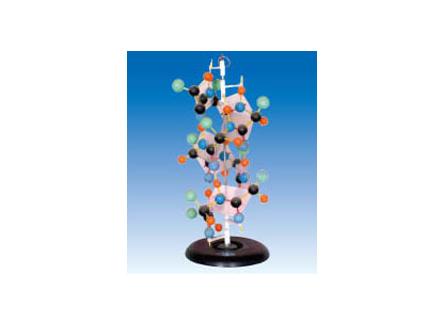 ZM6013 蛋白质演示模型
