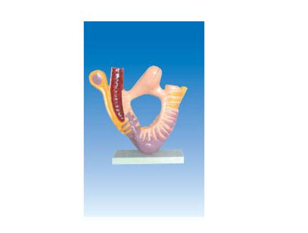 ZM6047 肾小体足细胞的超微结构