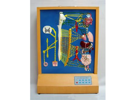 ZM8008 自主神经电动模型