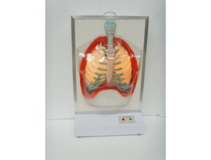 ZM8009-1 吸烟对人体危害