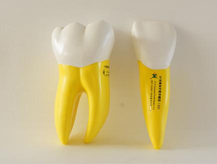 ZM-DSC02092_D15  15倍离体软牙