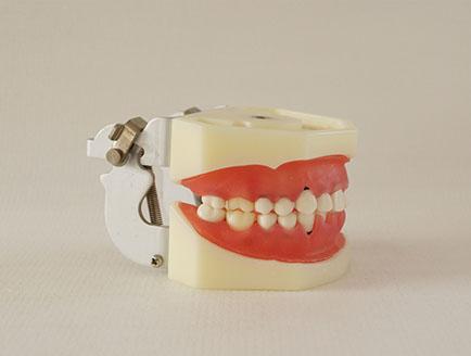 ZM-DSC02183_L5牙周病模型