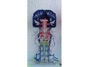 ZM1193-1 透明深、浅感觉传导