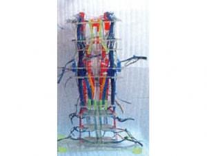 ZM1193-3 透明脑干神经核团