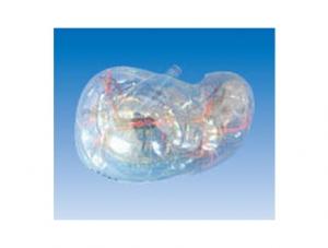 ZM1197 透明肝段