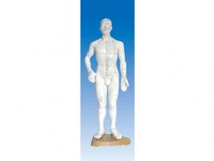 ZM3008 人体针灸模型