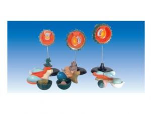 ZM6003 人胚受精、卵裂和胚泡形成过程