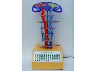 ZM8001 中枢神经传导电动模型