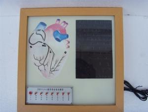 ZM8005 心脏传导系电动模型