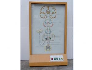 ZM8023 平衡觉传导电动模型