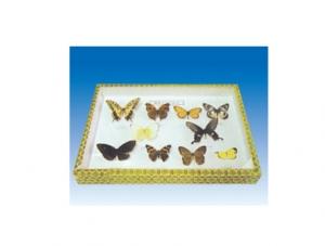 鳞翅目娥类科昆虫十种