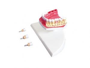 ZM1049-3 The model of mandibular teeth